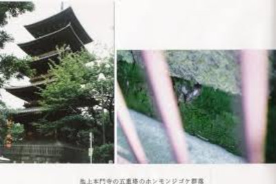Images3_3